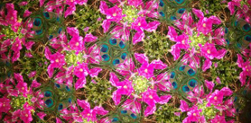 Photo of garden kaleidoscope