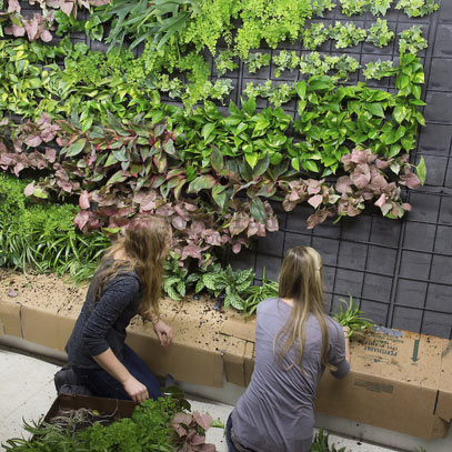 Photo of Eco Experience Green Wall